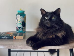 chat noir livre
